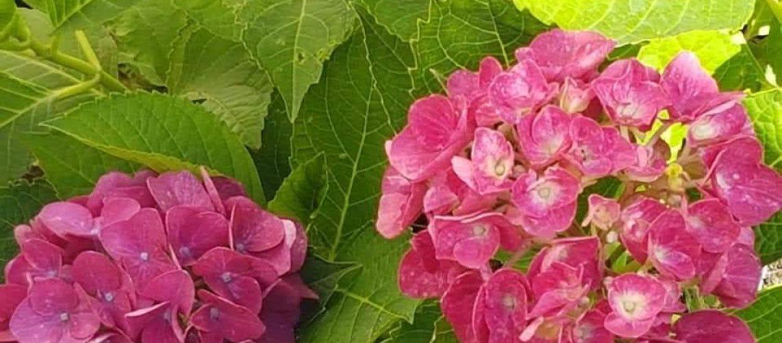 fiori Cenisio